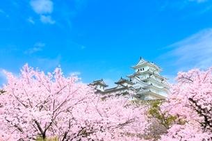 サクラと姫路城の写真素材 [FYI02097452]