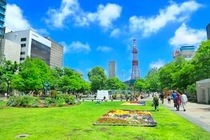 札幌,新緑の大通公園とさっぽろテレビ塔の写真素材 [FYI02097462]