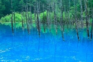 美瑛 青い池の写真素材 [FYI02097471]