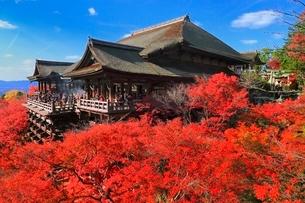 紅葉の清水寺の写真素材 [FYI02097526]