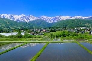 新緑の白馬村 水田と白馬三山の写真素材 [FYI02097604]
