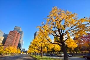 行幸通り 紅葉のイチョウ並木に丸の内ビル群の写真素材 [FYI02097625]