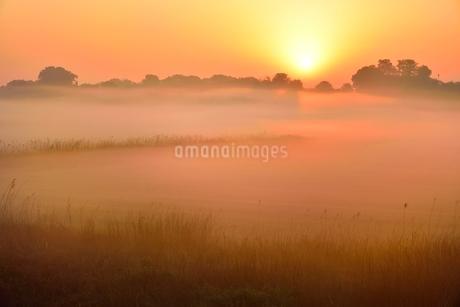 荒川河川敷の霧と朝日の写真素材 [FYI02097644]