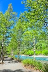 新緑の上高地,梓川と白樺林の小道の写真素材 [FYI02097686]