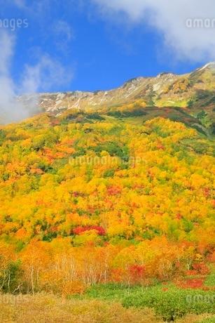 白馬山麓・栂池自然園の紅葉の写真素材 [FYI02097695]