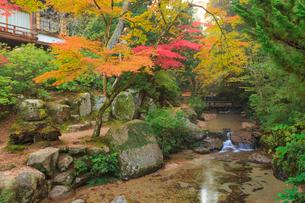 宮島 紅葉谷公園の紅葉の写真素材 [FYI02097739]