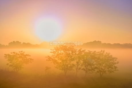 荒川河川敷の霧と朝日の写真素材 [FYI02097750]