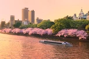 大川沿い桜並木の夕景と遊覧船の写真素材 [FYI02097763]