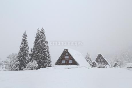雪降る白川郷合掌造り集落の写真素材 [FYI02097781]