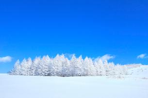 霧ケ峰高原 雪原と霧氷林の写真素材 [FYI02097802]