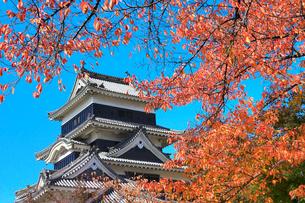 松本城天守閣と紅葉の写真素材 [FYI02097819]