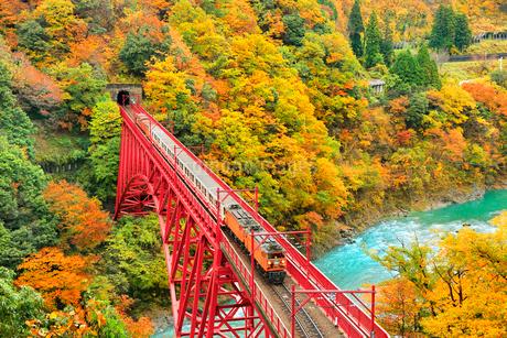 紅葉の黒部峡谷と鉄橋を渡るトロッコ列車の写真素材 [FYI02097821]