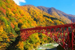 紅葉の黒部峡谷と鉄橋を渡るトロッコ列車の写真素材 [FYI02097842]