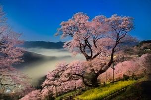 夜空に映えるひょうたん桜と雲海を月光で撮ったイメージの写真素材 [FYI02097850]