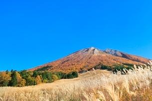 紅葉の大山と桝水高原のススキの写真素材 [FYI02097852]