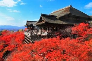 紅葉の清水寺の写真素材 [FYI02097853]
