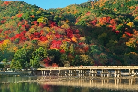 嵐山の紅葉と渡月橋の写真素材 [FYI02097875]