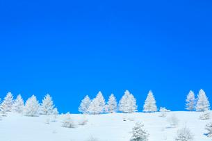 霧ケ峰高原 霧氷の木々の写真素材 [FYI02097897]