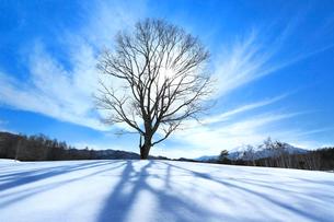 冬の開田高原 コナラの一本木と太陽の写真素材 [FYI02097900]