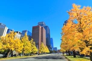 丸の内ビル群とイチョウ並木の紅葉に行幸通リの写真素材 [FYI02097945]