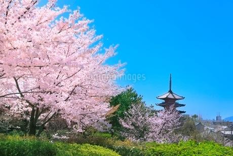 八坂の塔とサクラに京都市街の写真素材 [FYI02097947]