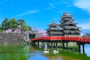 松本城天守閣と内堀の狸橋に白鳥の写真素材 [FYI02097962]