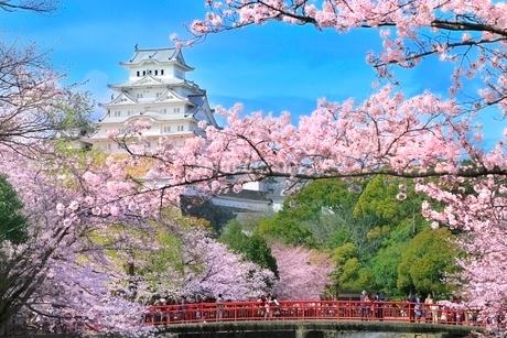 サクラ咲く姫路城の写真素材 [FYI02097973]
