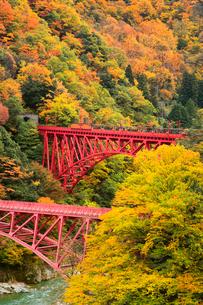 紅葉の黒部峡谷と鉄橋を渡るトロッコ列車の写真素材 [FYI02097981]