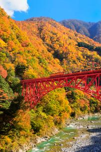 紅葉の黒部峡谷と鉄橋を渡るトロッコ列車の写真素材 [FYI02097998]