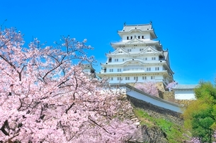 サクラ咲く姫路城の写真素材 [FYI02098009]