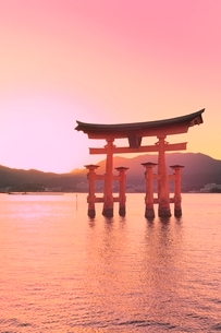 宮島夕景 厳島神社の大鳥居の写真素材 [FYI02098014]