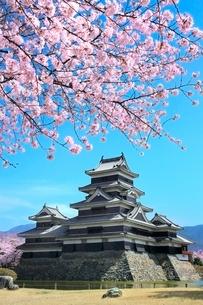 松本城天守閣と桜の写真素材 [FYI02098056]