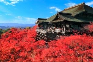 紅葉の清水寺の写真素材 [FYI02098167]