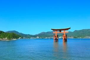 宮島 厳島神社の大鳥居の写真素材 [FYI02098308]