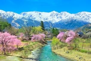 桜咲く白馬大出の姫川と白馬三山の写真素材 [FYI02098461]