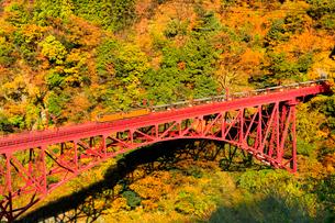 紅葉の黒部峡谷と鉄橋を渡るトロッコ列車の写真素材 [FYI02098528]