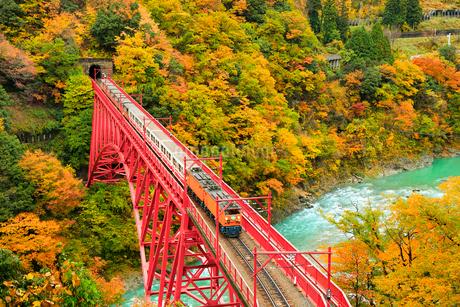紅葉の黒部峡谷と鉄橋を渡るトロッコ列車の写真素材 [FYI02098803]