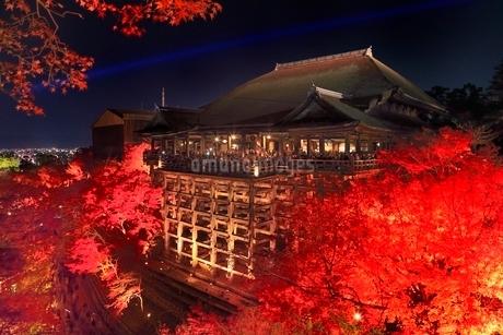 ライトアップされた紅葉の清水寺夜景の写真素材 [FYI02098806]