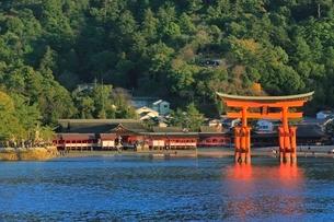 宮島 厳島神社と大鳥居の写真素材 [FYI02098879]