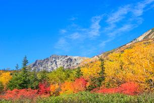 栂池自然園の紅葉と白馬岳の写真素材 [FYI02098921]