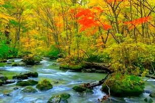 奥入瀬渓流の紅葉の写真素材 [FYI02098955]