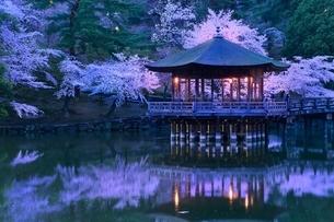 奈良公園 鷺池と浮見堂にサクラの夜景の写真素材 [FYI02098974]