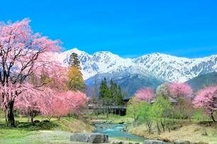 桜咲く白馬大出の姫川と白馬三山の写真素材 [FYI02098975]