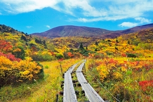 名残ヶ原の紅葉と栗駒山の写真素材 [FYI02099015]