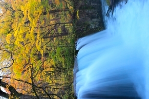 奥入瀬渓流 銚子大滝と紅葉の写真素材 [FYI02099145]