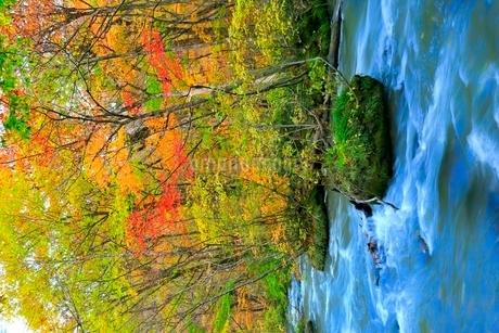 奥入瀬渓流の紅葉の写真素材 [FYI02099177]
