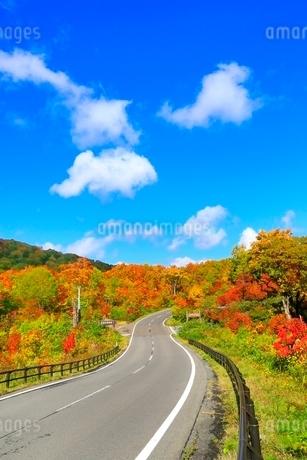 八幡平アスピーテラインの紅葉の写真素材 [FYI02099204]
