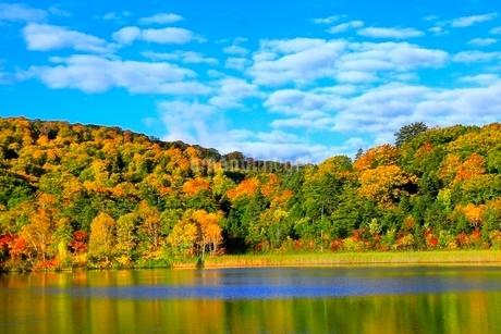 八幡平 大沼の紅葉の写真素材 [FYI02099378]