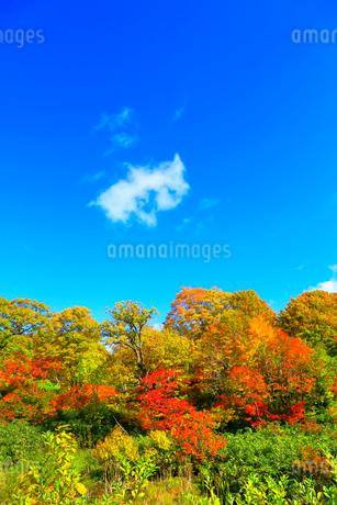 八幡平アスピーテラインの紅葉の写真素材 [FYI02099395]