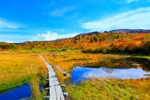 栗駒山 紅葉の湿原と木道の写真素材 [FYI02099480]